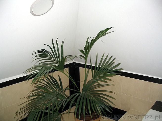 Kwiaty w łazience - ale tylko kiedy jest odpowiednia ilość miejsca. Zieleń relaksuje ...